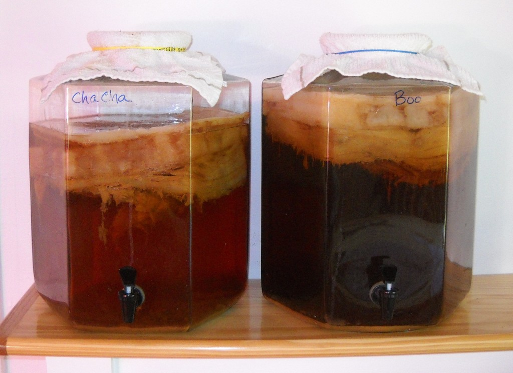 how to grow a scoby mother from scratch
